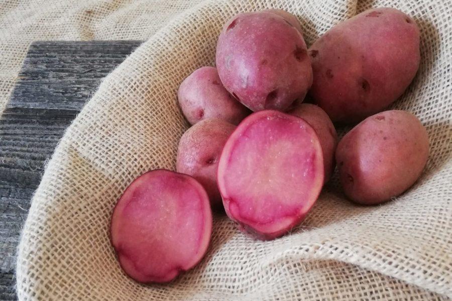 rosa Erdäpfelrarität, Foto von Handlsberger