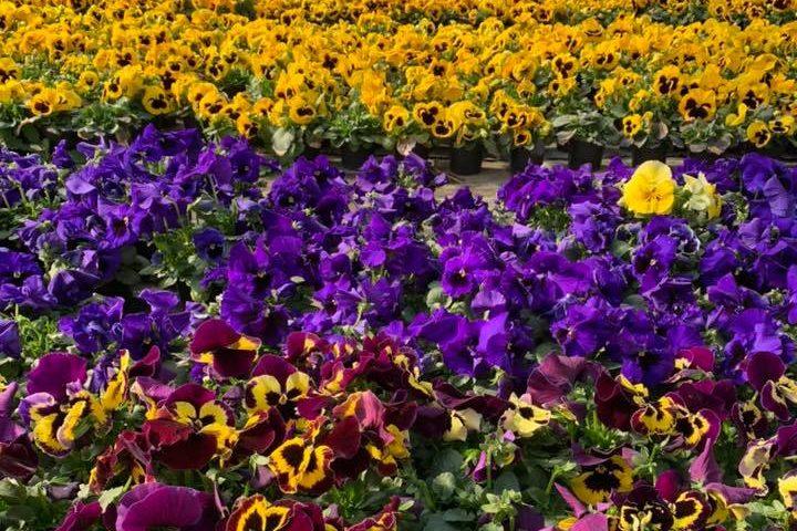 Frühlingsblüher bei Eventfloristin, Foto Beate Lohner-Spohn