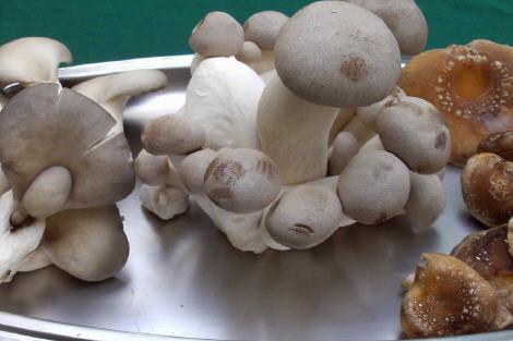Pilze aus der Wagramer Pilzzucht, Foto von Martin Schmit