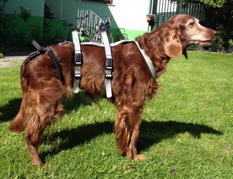 Hebgeschirr für Hunde, Foto von tierschuh.at