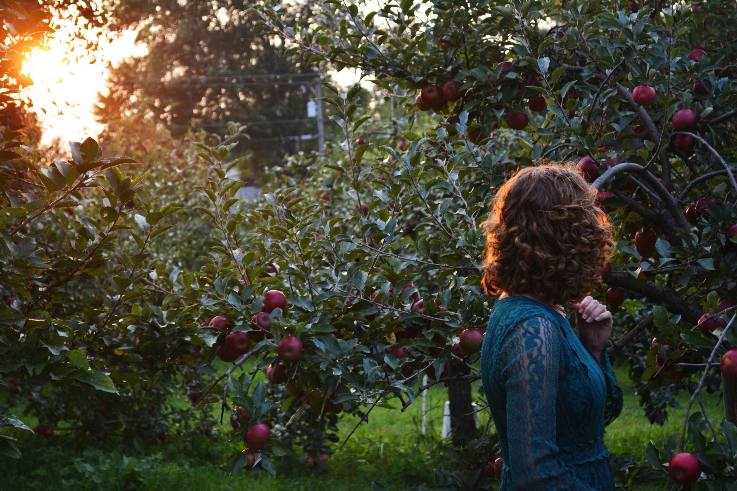 Apfelbaumgarten, Foto von Marissa Price auf Unsplash