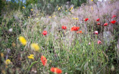 """""""Natur im Garten"""" Plaketten-Aktionstage am 17. und 18. September 2020"""